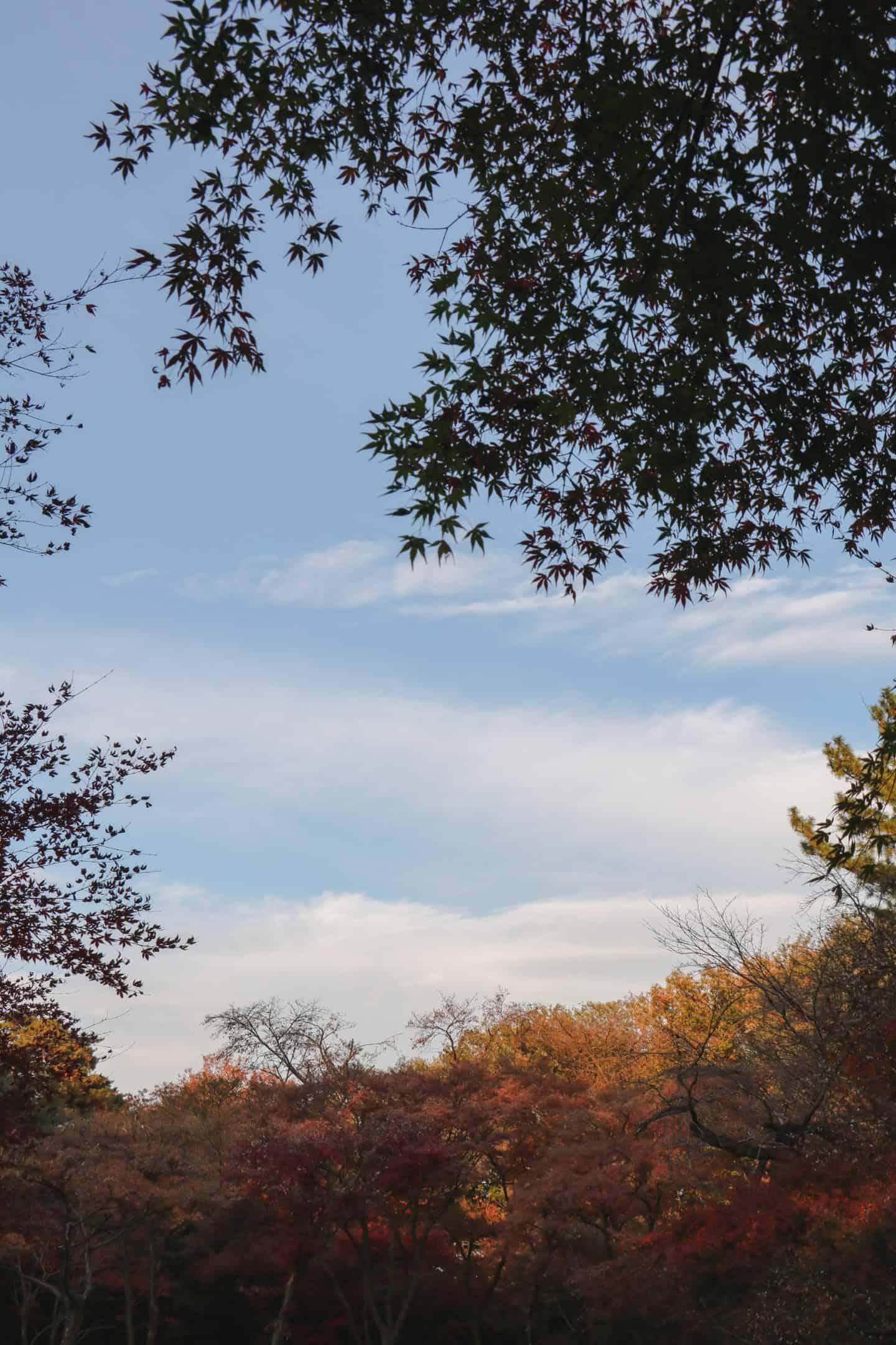 fall leaves in london