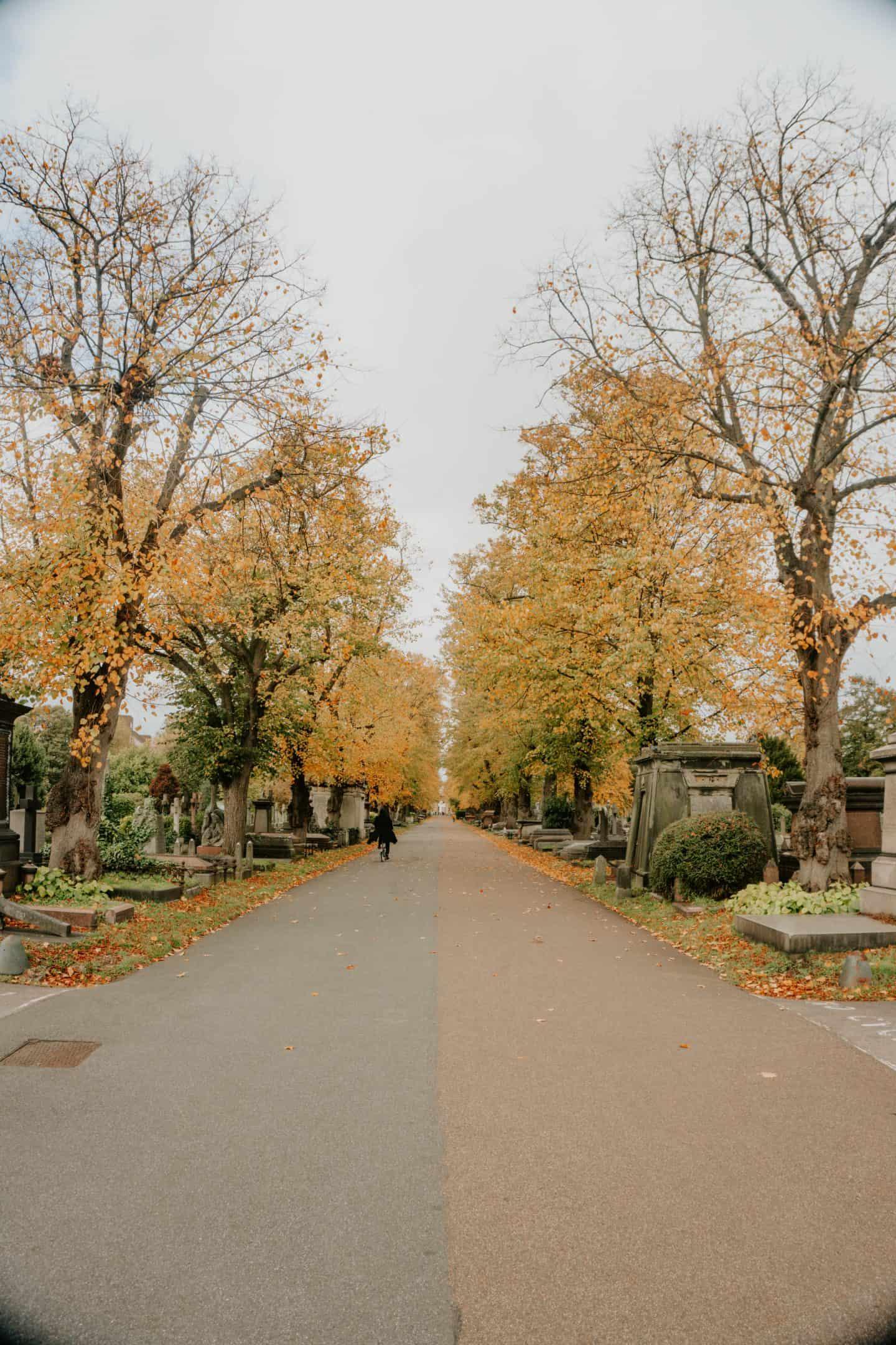 Leaves at Brompton Cemetery London
