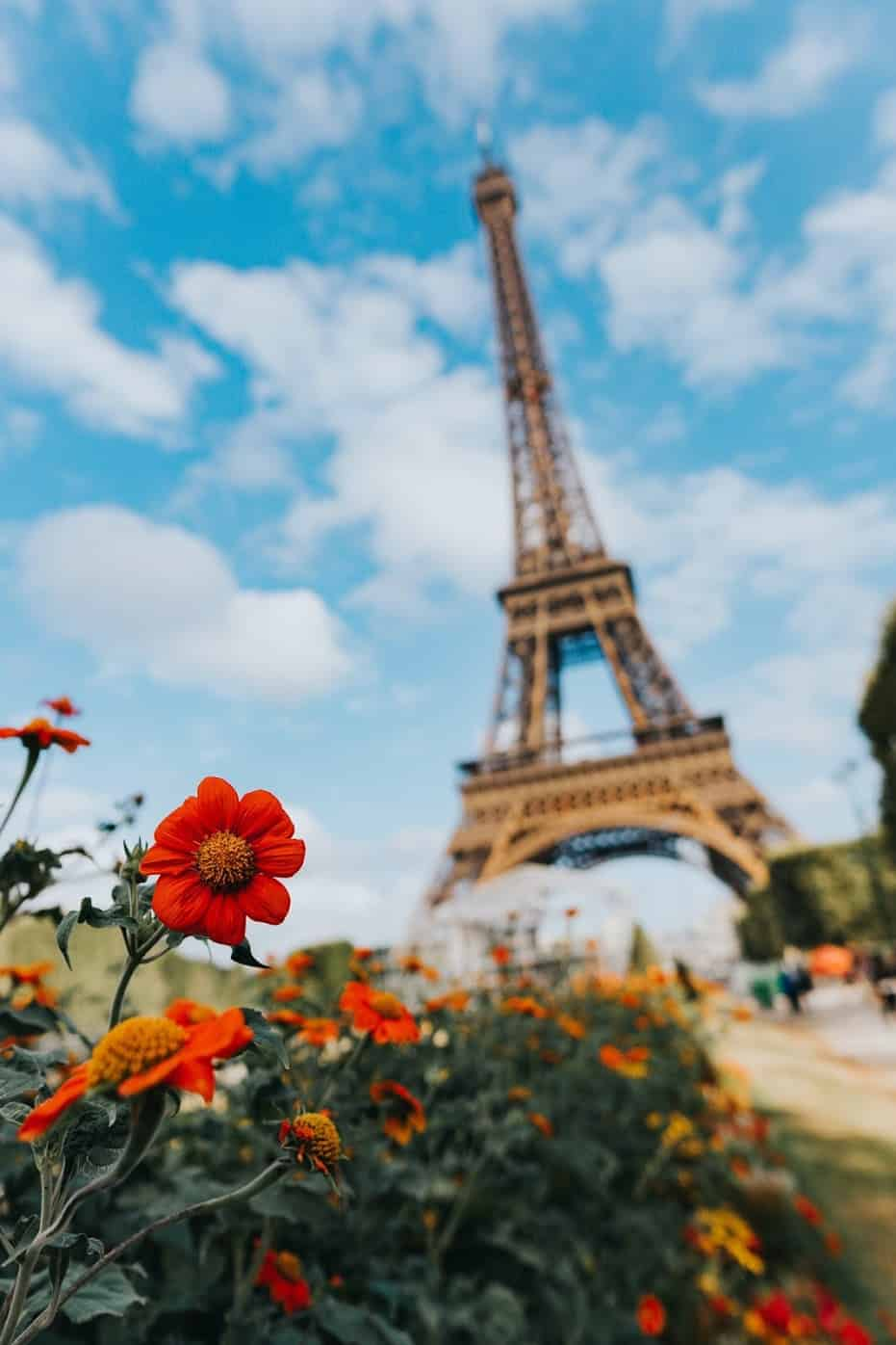 Paris-France-Red-Flower