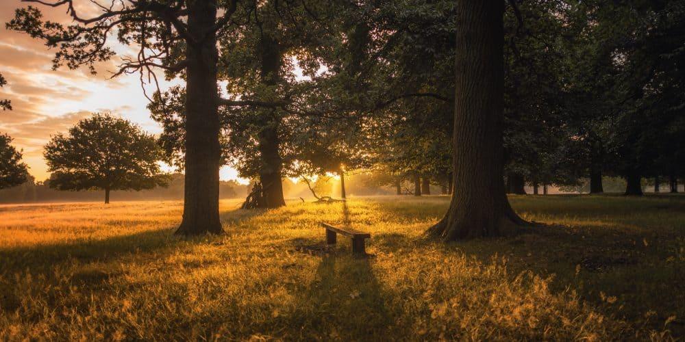 Richmond- Park- During- Sunset