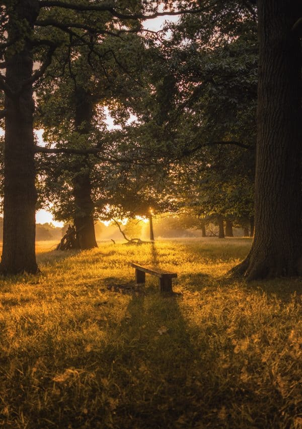 5 Magic Things to do in Richmond Park, London